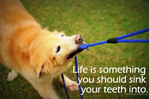 Life is something you should sink your teeth into.