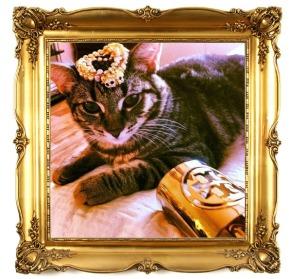 Rich Cats ofInstagram